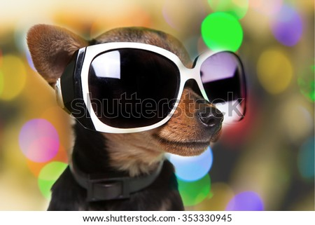 dog with sunglasses - stock photo