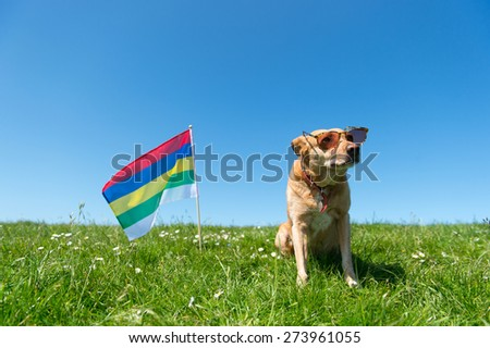 Dog with sunglasses and Dutch flag at wadden island Terschelling - stock photo