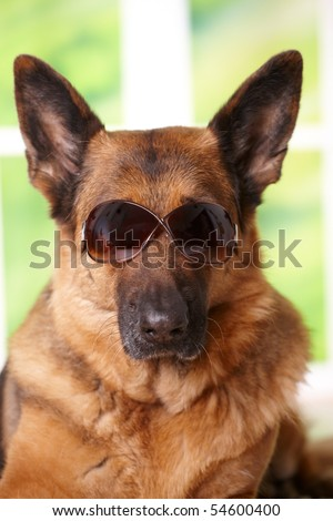 Dog with sunglasses laying in home - stock photo
