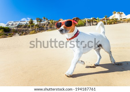 dog with sunglasses running at the beach on summer vacation holidays - stock photo
