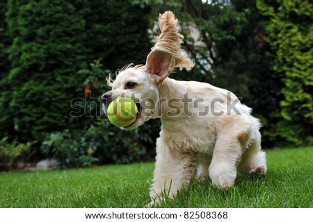 Dog with tennis ball - stock photo