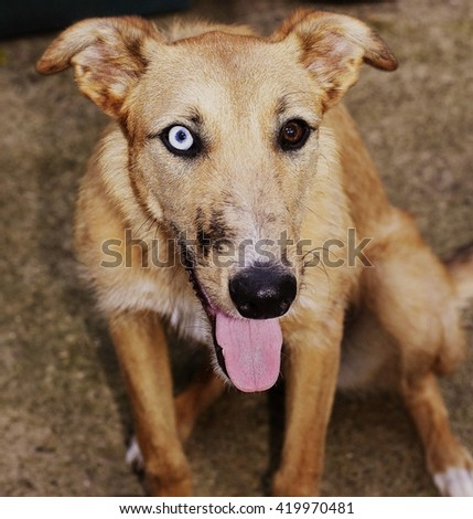 dog with two different color of eyes