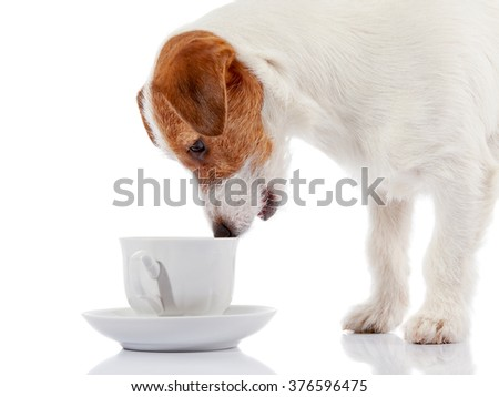 Doggie of breed a Jack Russell Terrier and white cup on a white background. - stock photo