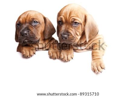 Doggies send a message! - stock photo