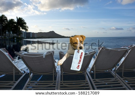 Doggy on vacation in Hawaii. - stock photo