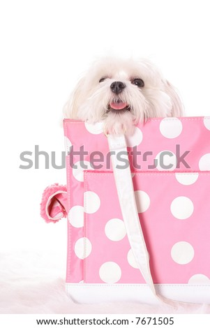 doggy travel - stock photo