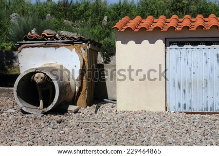 Doghouse - dog in concrete pipe - stock photo
