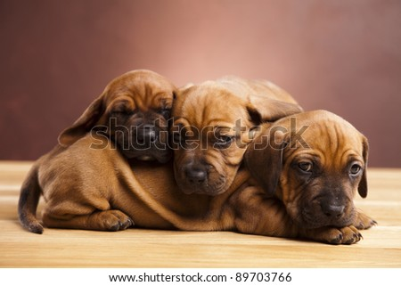 Dogs - stock photo