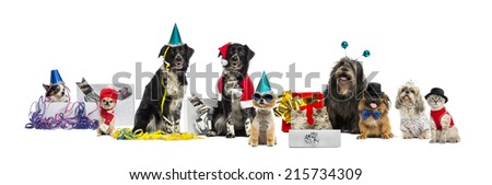 Dogs and a cat partying - stock photo