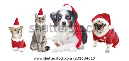 dogs and cat as a Christmas gift, exempted, white background, dressed as santa claus, cutout - stock photo