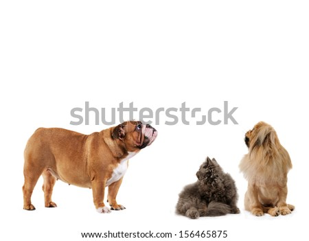 Dogs and cat look up isolated white background