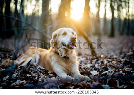 Dogs at sunset