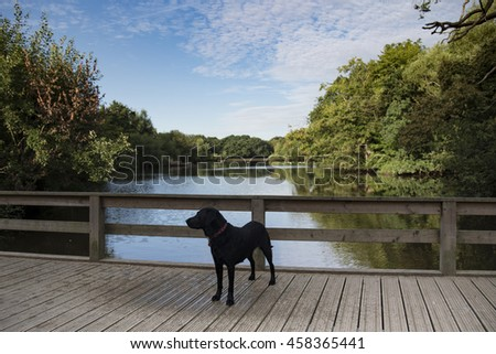 dogs at the lake - stock photo