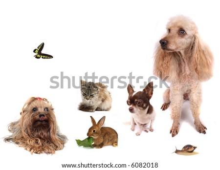 dogs, cat, rabbit, snail, butterfly - stock photo
