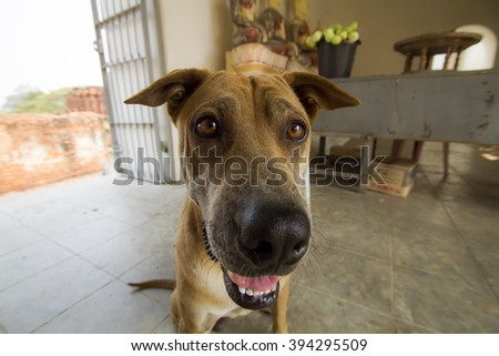 Dogs do curious and look cute - stock photo