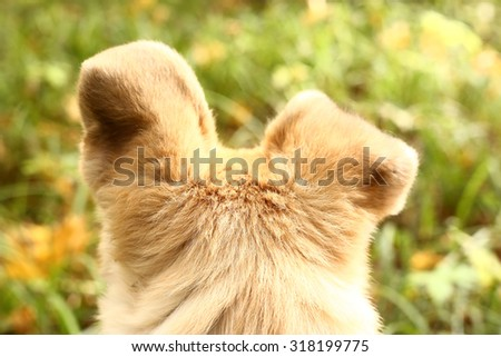 dogs  ears alert to hear autumn nature sounds - stock photo