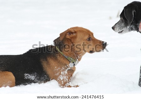 Dogs eyeing each other - stock photo