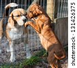 Dogs greeting each other in animal shelter - stock photo