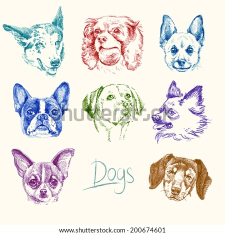 dogs - hand drawn set - stock photo