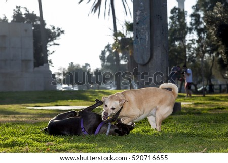 Dogs having fun in the park in the afternoon.