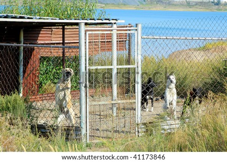 Dogs in a cage - stock photo