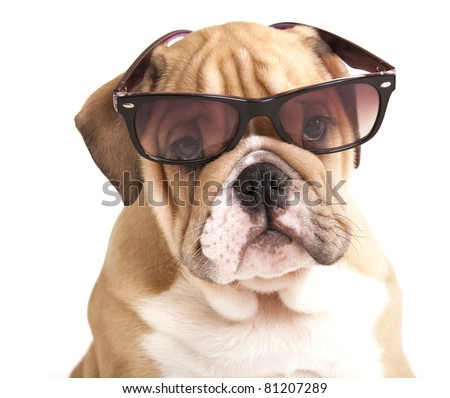 dogs in glasses - stock photo