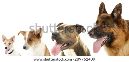 Dogs in row isolated on white - stock photo
