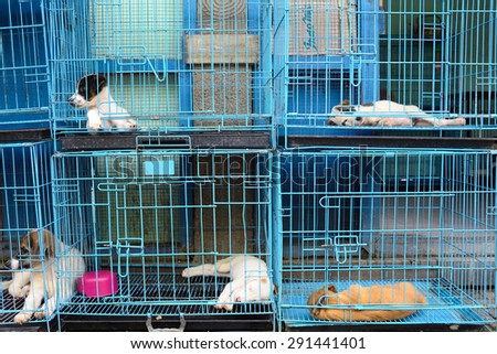 dogs in the cage - stock photo