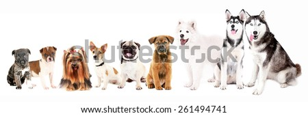 Dogs isolated on white - stock photo