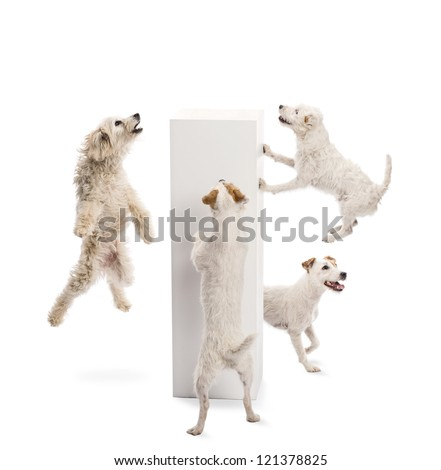 Dogs jumping and looking at pedestal against white background - stock photo