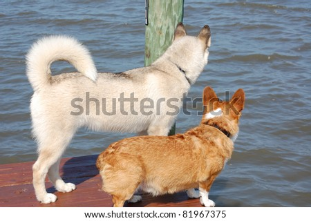 Dogs on dock - stock photo