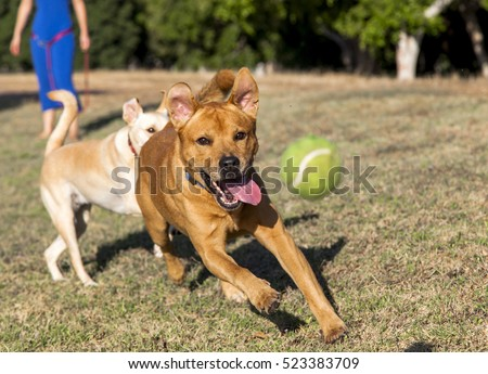 Dogs playing and running around on the park's grass, having quality time with their owner.