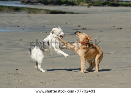 Dogs playing on beach in San Diego, California - stock photo