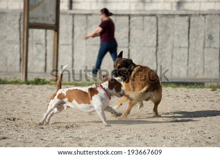 Dogs playing on the sand