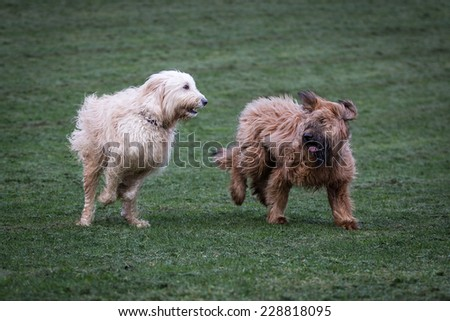 Dogs Playing Together - stock photo