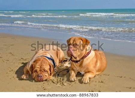 Dogs romantic vacation at the beach - stock photo
