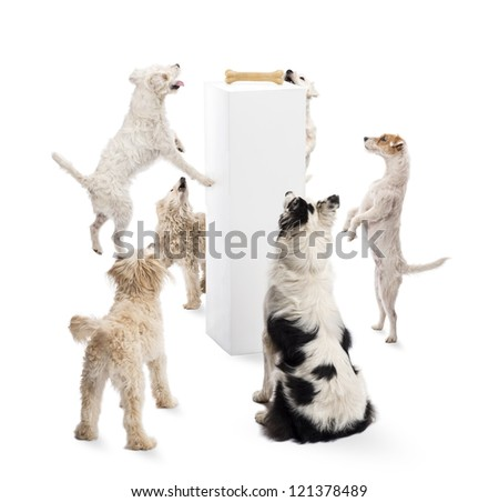 Dogs sitting, jumping, looking at a bone on a pedestal against white background - stock photo