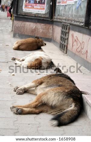 Dogs sleeping - stock photo