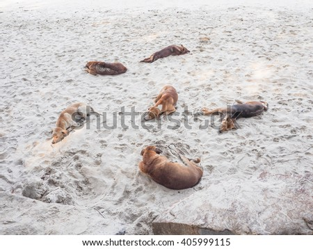 Dogs sleeping on sand - stock photo