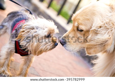 dogs ,small dog big dog,yellow grey dog,big dog,small dog,dogs friends,wonderful dogs,cute pet,dogs looking each other,dogs in street,beautiful dogs,dogs heads,animal,domestic animals,amazing dogs,dog - stock photo