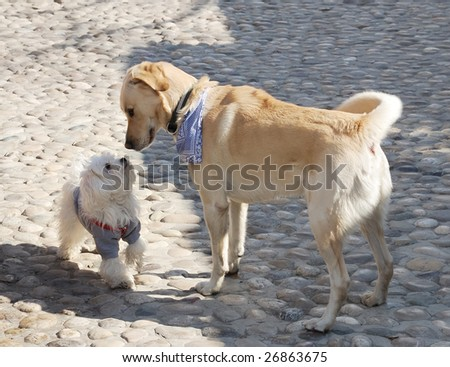 Dogs sniffing each other on a first meeting - stock photo