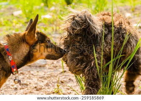 Dogs sniffing other dogs butts - stock photo