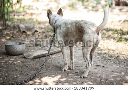 Dogs that are chained - stock photo