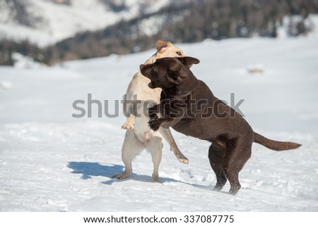 dogs while playing on the snow background