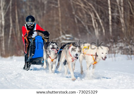Dogsled Competition - stock photo