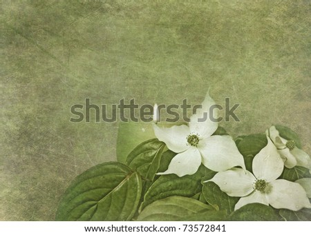 dogwood bouquet with textured overlay - stock photo