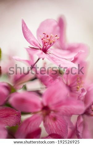 Dogwood tree bloom close up in Spring vertical - stock photo