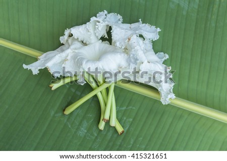 Dolichandrone on leaf background, Thailand herb background.