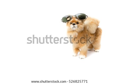 doll dog wearing sunglasses on white background with copy space for add text