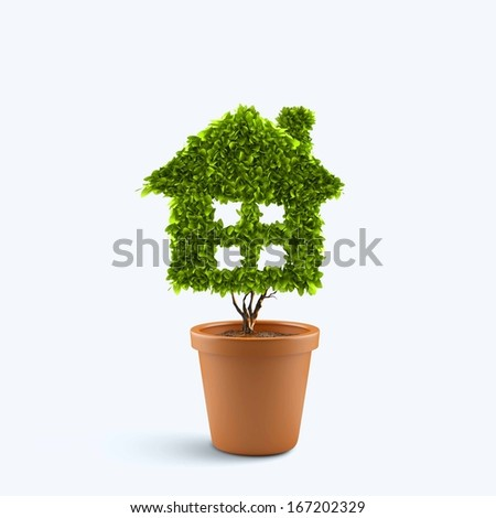 Dollar tree in plant pot. Wealth concept